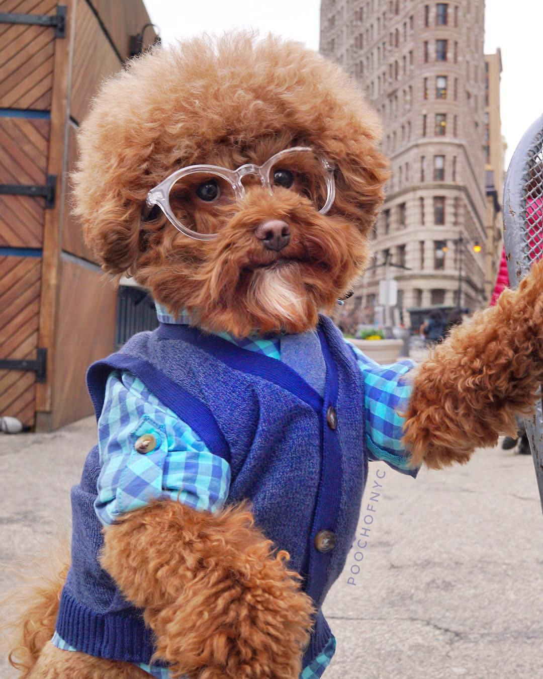 17596553 188432398328923 8508819809582972928 n - 3 of the most trendy and hilarious dogs on Instagram