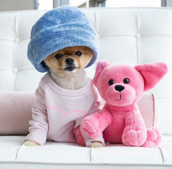 jiffpom - 3 of the most trendy and hilarious dogs on Instagram