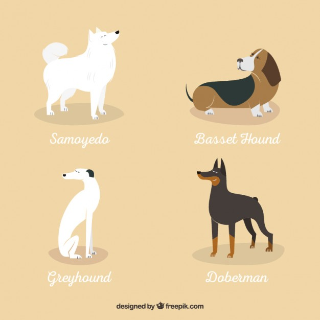 variety of dog breeds 23 2147520211 - My fascination for hounds that stems from Hound of the Baskervilles
