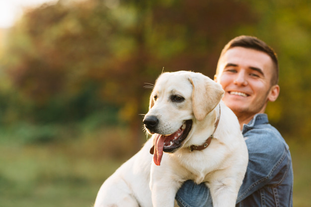 guy holding his friend dog labrador and smiling at sunset 8353 6467 - Why Pet consultants are useful in solving dog-related emergencies